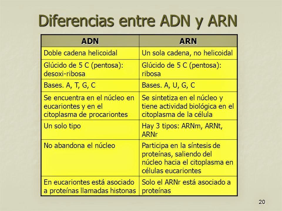 Andrea Adn Y Arn