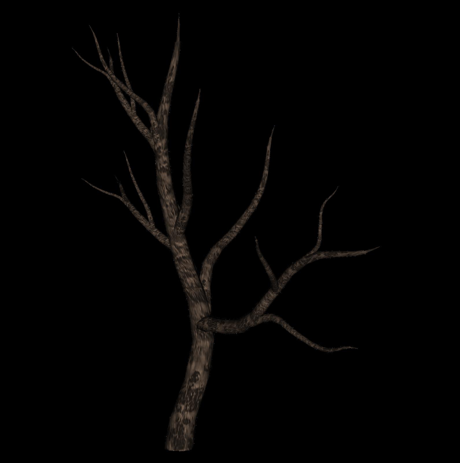 Картинки ветки дерева