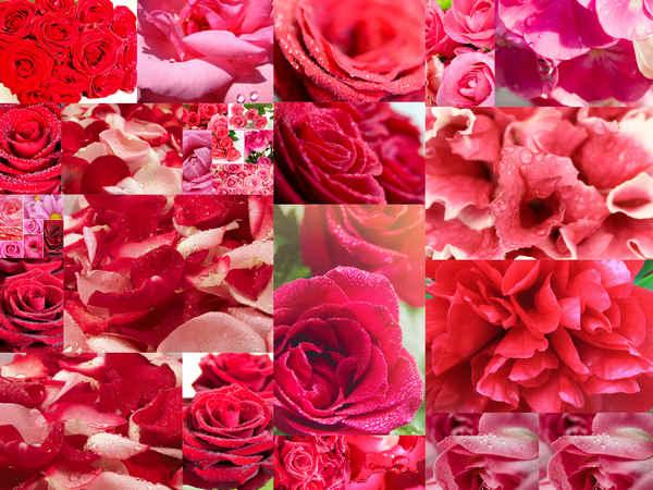 تحميل 21 صورة للورد الأحمر بجودة عالية