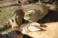 جزيرة الأرانب فى أوكونوشيما, احد اماكن الحرب الكيميائية السابقة