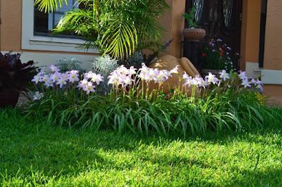 Bunga di Halaman Rumah