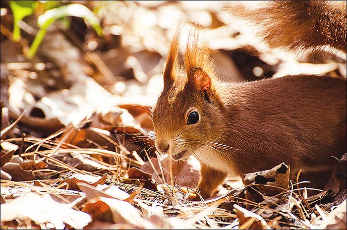 Rombergpark - Fotografie - Frühling - Makro - Eichhörnchen