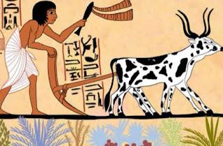 الزراعة في مصر القديمة