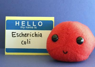 Natural Remedy For E Coli Bacteria