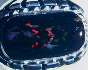harga black opal terbaru