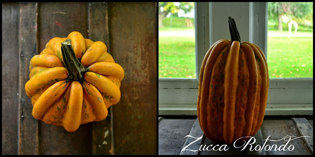 http://www.ironoakfarm.blogspot.com/2014/10/zucca-rotondo-pumpkin.html