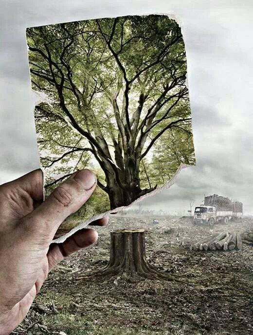 Deforestation Effects