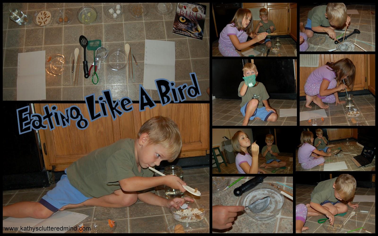Kathys Cluttered Mind Bird Beak Comprehension