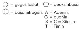 gugus-fosfat-deoksiribosa-basa-nitrogen