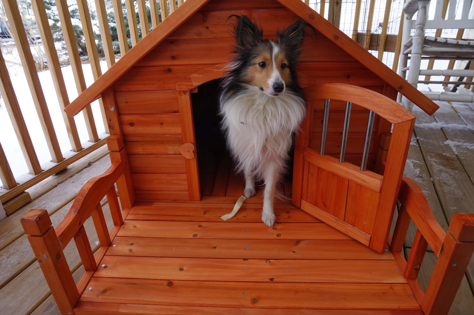 At The Fence  Pet Squeak Porch Pups Dog House