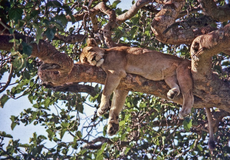 Best places to spot the Big Five in Sub-Saharan Africa 3