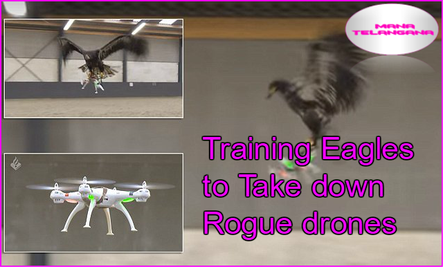 Dutch Police Are Training Eagles To Take Down Drones