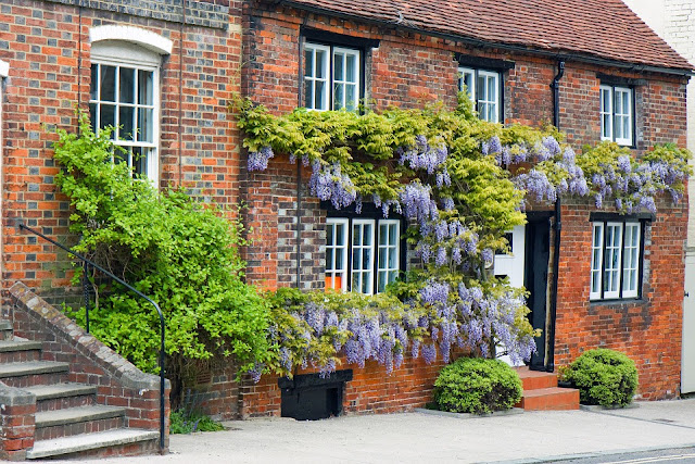 What is the best place to plant Wisteria