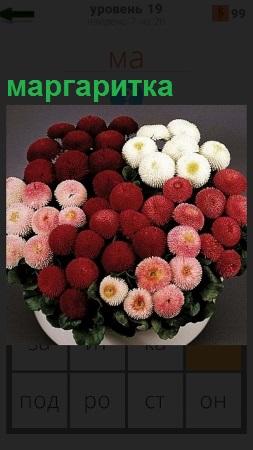 В белой ваза стоят маргаритки красного и белого цвета, составлена композиция
