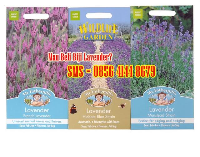toko online bunga lavender biji seed foregill