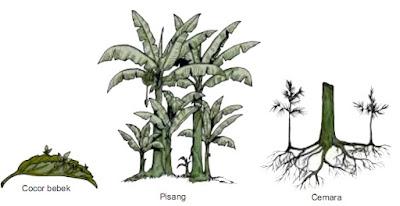 Materi IPA 6 SD : Perkembangbiakan Tumbuhan