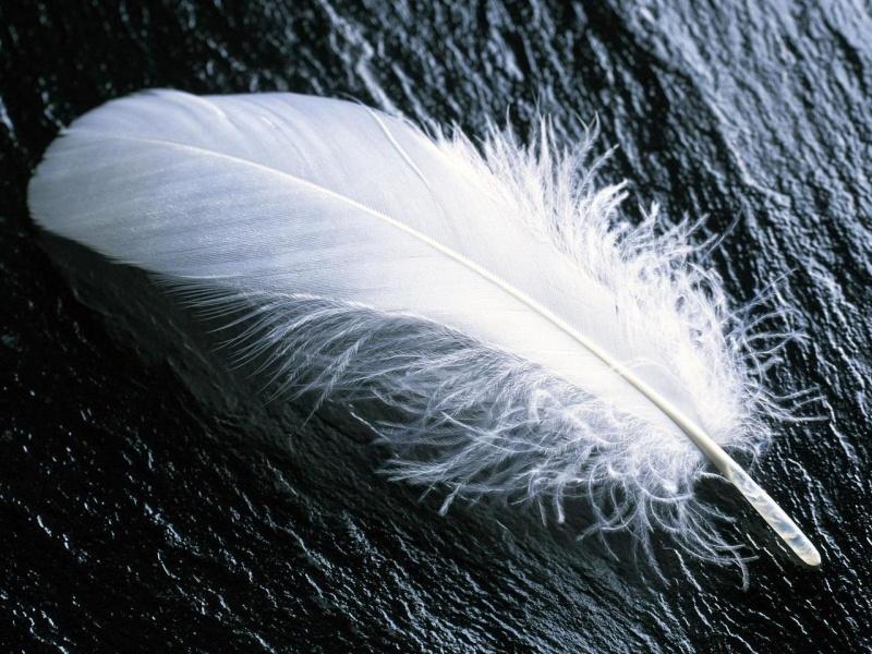 Resultado de imagen de pluma blanca
