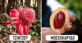 Πώς είναι αγαπημένα προϊόντα της φύσης πριν μπουν στα ράφια του σουπερμάρκετ - ΕΙΚΟΝΕΣ