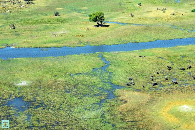 Vuelo sobre el Delta del Okavango en Botswana