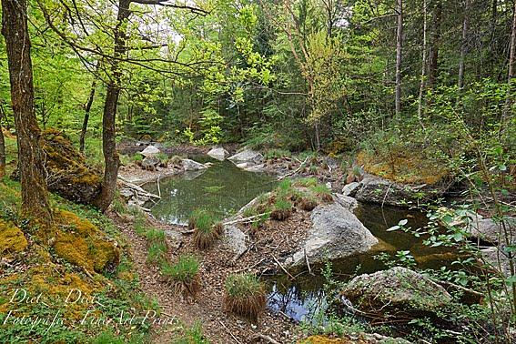 Teich am Hexen-Weg im trockenen Frühling 2020