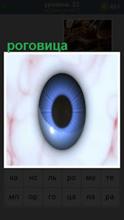 роговица глаза, в центре зрачок синего цвета