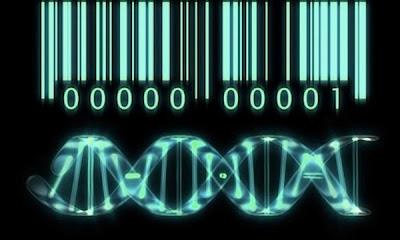 Dios, ingeniero genético, Francisco Acuyo
