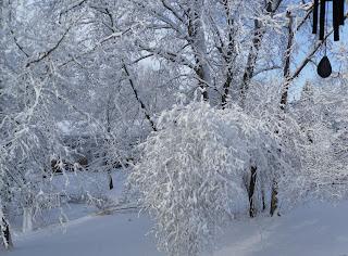 snow frozen trees