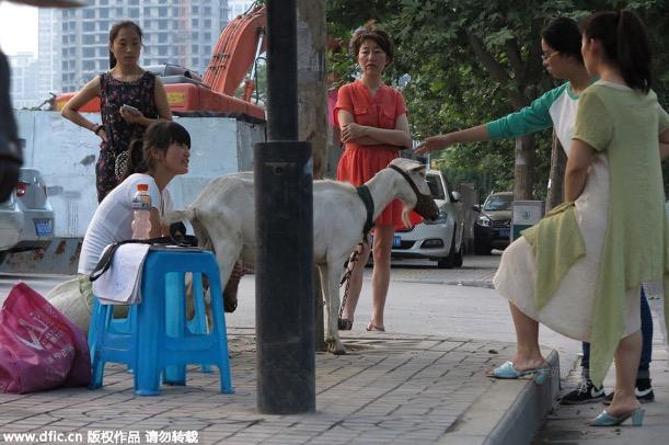 Hanya di China Orang Berniaga Perah Susu Kambing Tepi Jalan