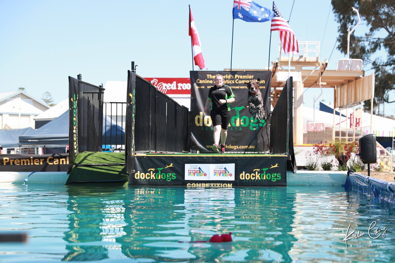 DockDogs canine aquatics competition - Big Air at the Perth Pet Expo