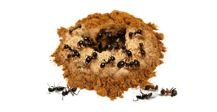 Cinnamon Will Help You Get Rid Of Ants Forever