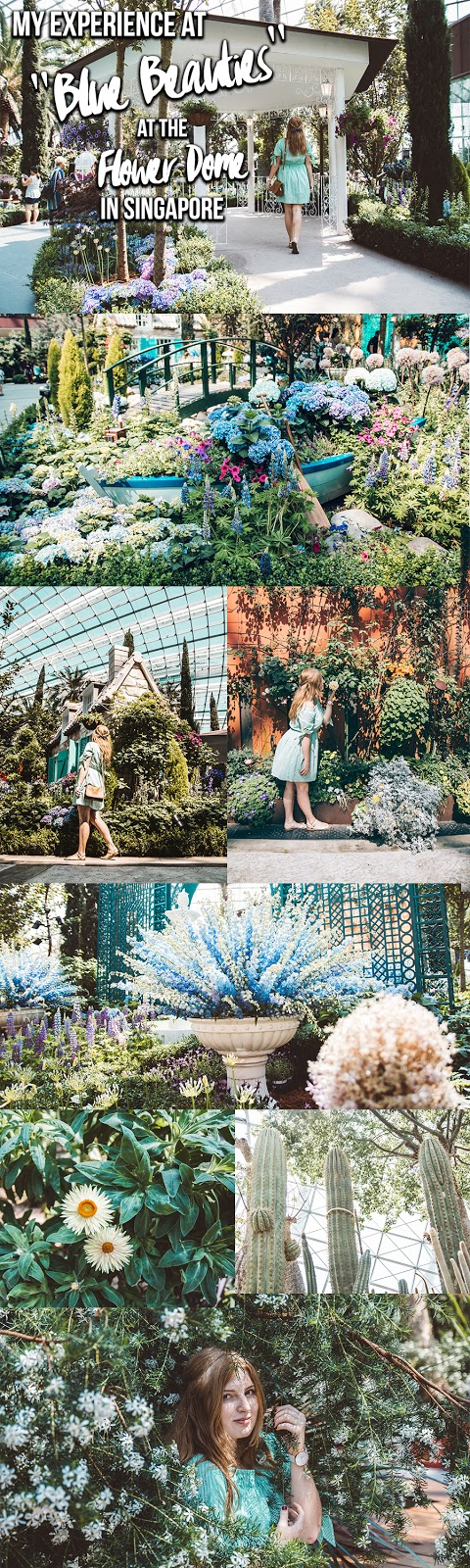 """My Experience at """"Blue Beauties"""" at the Flower Dome in Singapore"""