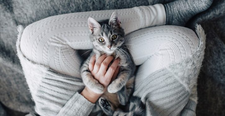 Company Is Looking For People To Cuddle Cats All Day Long