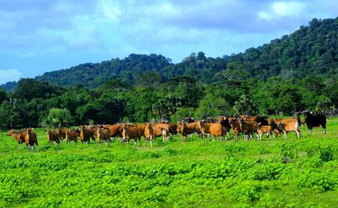Tempat wisata Padang rumput sadengan banyuwangi