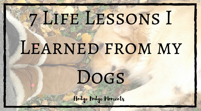 7 Life Lessons I Learned from my Dogs