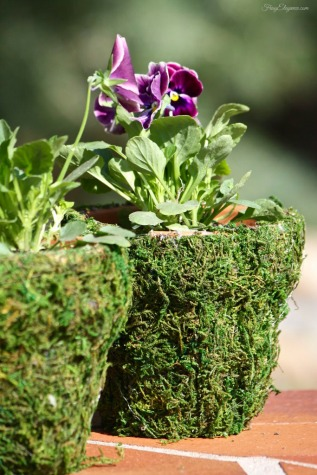 Moss Covered Spring Pots from FrugElegance