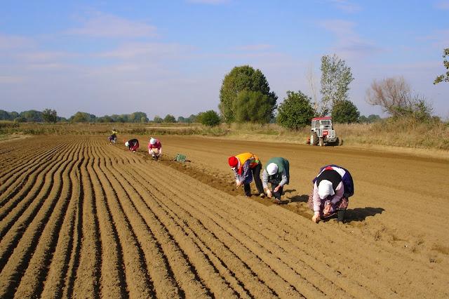 Θηλιά στο λαιμό των αγροτών τα δάνεια της πρώην ΑΤΕ - Απειλητικά εξώδικα σε αγρότες και της Αργολίδας