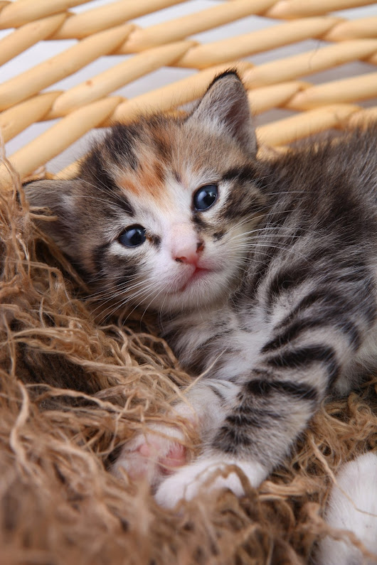 10 Tips For Bringing A Kitten Into Your Home