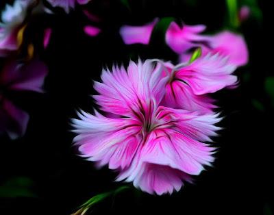 Blumen, flores, Flower, fleurs, květiny, Flores, blomme, blommor, çiçekler, kwiaty, Flor, Hoa, nở hoa, floración, bloom, Kukka, kukinta, La floraison, Fiore, Cvjetni, cvatu, Цвет,   Bloem, bloei, Цветок, цветение,