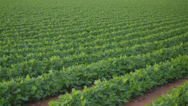 حماية التربة، طرق للحفاظ على التربة