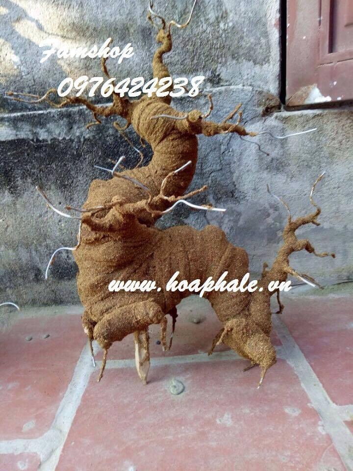 Goc bonsai mai dao the rong tai Vu Huu Loi