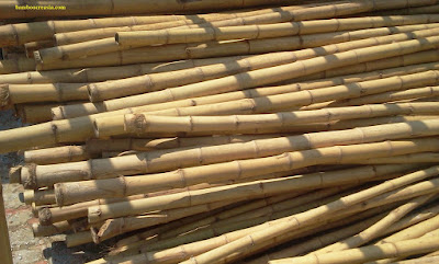 Buy Bamboo-Bamboo poles,sticks,cane for sale-Wholesale bamboo sticks for decorations-Cheap decorative bamboo poles