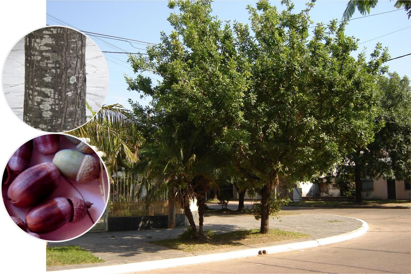 V e r d e c h a c o roble carballo for Arboles perennes en argentina