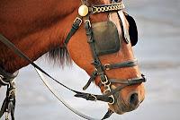 at gözlüğü