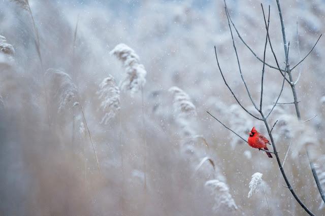 czyste powietrze w zimie