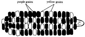 【BIO】公式化解決 Genetic Problems