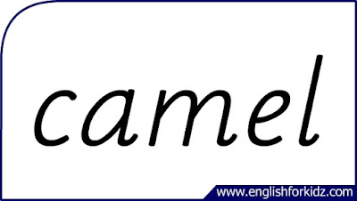 camel flashcard, single word, English flashcards for kids