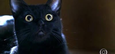 O gato León em cena da novela das nove da Globo; bichano surgirá em uma 'visão' de Luz (Marina Ruy Barbosa)