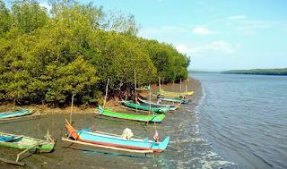 Pantai Bedul dan Wisata Mangrovenya