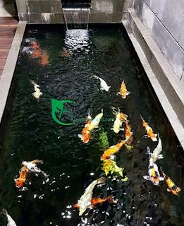 Tukang kolam koi jakarta - tukang kolam relief - tukang kolam minimalis jakarta