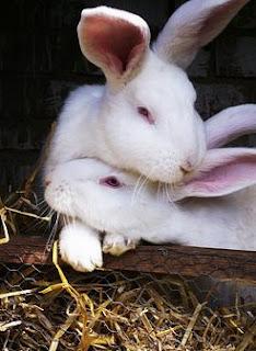 gambar Berbagai penyebab kelinci mengalami stress